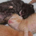 featured kittens