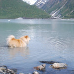 Dog-in-Lake_sm